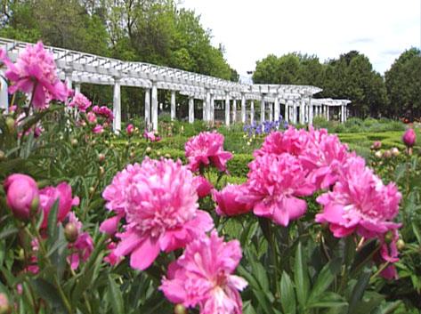 Sonnenberg Gardens Restoration 2 - Pergola